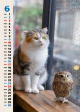 カレンダータイプの写真も毎月追加される