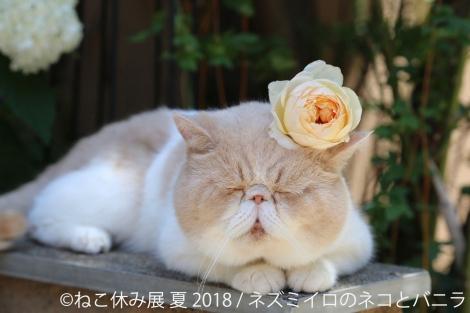 サムネイル 今年で3周年の人気イベント『ねこ休み展』が開催(2018年7月27日〜8月26日/主催:BACON)