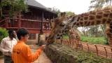 7月15日放送、RKB・TBS系ドキュメンタリー『地球に生きる仲間たち!〜絶滅危惧種に会いに行こう in アフリカ〜』より。ケニアでキリンについて学ぶ大牟田市動物園の飼育員・河野成史さん(C)RKB