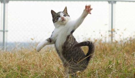 サムネイル 家猫の「奇跡の1枚」を撮る技をレクチャー本『ねこ拳撮影術』(久方広之・著/8月16日発売/玄光社)