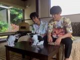 9月6日放送、NHK総合『もふもふモフモフ』保護猫カフェを訪れた北村匠海&中川大志(C)NHK