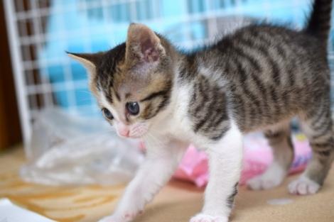 ペット保険に関する調査結果を発表(画像はイメージ)
