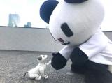 ゴーちゃん。、犬型ロボット・aiboと運命の出会いを果たす。aibo史上初となるコラボグッズも制作決定(C)テレビ朝日