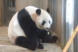 母親のシンシン(2018年10月22日撮影)(公財)東京動物園協会