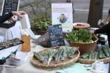 東京の丸の内地区で開催された、食と農林漁業の祭典『JAPAN HARVEST 2018 丸の内農園』 (C)oricon ME inc.