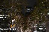 クリスマスツリー点灯式とともに一斉点灯した丸の内仲通りの街路樹のイルミネーション (C)ORICON NewS inc.