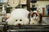 テレビ朝日系金曜ナイトドラマ『僕とシッポと神楽坂』看板犬のダイキチと地域猫のオギ (C)テレビ朝日
