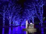 『青の洞窟 SHIBUYA』点灯式に出席した加藤綾子 (C)ORICON NewS inc.