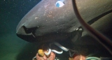 駿河湾の深海で撮影したオンデンザメ(写真提供:BS朝日)