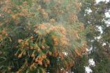 今春の花粉飛散量は東北から近畿でやや多く、中国地方は多いという予想。
