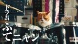 ドラム担当の猫のふてニャン