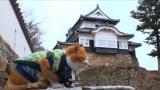 2月22日放送、BSテレ東7(にゃにゃ)チャンネル『ポチたまペット大集合 猫の日記念いやしのニャンコあつめてみましたSP』迷い猫から備中松山城主になったさんじゅーろー(C)BSテレ東
