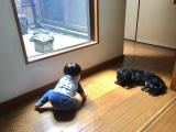 ぺこの実家で愛犬と戯れるリンクくん(写真はオフィシャルブログより)