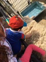 羊をなでるリンクくん(写真はオフィシャルブログより)