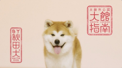 """WEB動画「秋田犬が大館の魅力を指南?""""Odate Lesson by Akita Dog""""」より"""