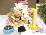 『東京おもちゃショー2019』授賞式でイノベイティブ・トイ部門の大賞に授賞した『夢ペット ねこ産んじゃった!/いぬ産んじゃった!/うさぎ産んじゃった!』 (C)ORICON NewS inc.