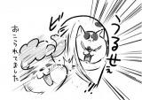 『犬と猫どっちも飼ってると毎日たのしい』のひとコマ(画像提供:松本ひで吉さん @hidekiccan)