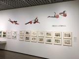 『おもひでぽろぽろ』(C)1991 岡本螢・刀根夕子・Studio Ghibli・NH=東京国立近代美術館で開催中の『高畑勲展─日本のアニメーションに遺したもの』 (C)ORICON NewS inc.