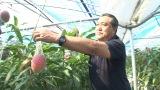 7月14日放送、『カンニング竹山の新しい人生、始めます! 2時間SP』番組で紹介するマンゴー農家(C)BSテレ東