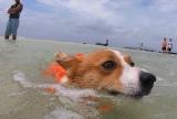 訪れた海水浴客に犬かきを教えるワンコがお姉さんたちを叱咤激励(C)NHK