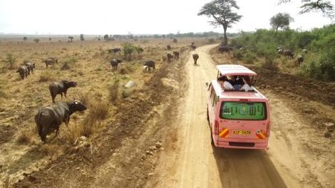 『あいのり:African-Journey』(C)フジテレビ