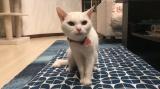 『猫探偵の事件簿2』ネコと人・深い絆を描く感動エピソード3連発