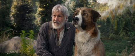 映画『野性の呼び声』(2月28日公開)ソーントン(ハリソン・フォード)とバック(C)2020 TWENTIETH CENTURY FOX FILM CORPORATION. ALL RIGHTS RESERVED.