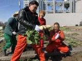 大根を収穫(C)テレビ東京