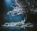 Aimer「春はゆく」(ソニーミュージックエンタテインメント/3月25日配信開始)※画像は同日発売CDシングル「春はゆく/marie」ジャケット写真