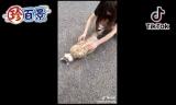 6月14日放送、『ナニコレ珍百景』で紹介された「行儀よくあお向けの姿勢で眠るネコ」(C)テレビ朝日