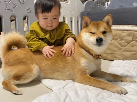 """サムネイル 頼りがいがある…ウインクをキメる""""柴犬兄さん""""こと、りんご郎くん(画像提供:@ringoro119)"""