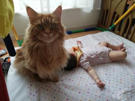 サムネイル 「頼もしい警備猫」「神獣かと思いました」とSNSで話題となったやしゅうさんの猫(画像提供:@FakeYashu)