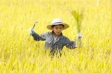 新潟米『新之助』稲刈りイベントの模様