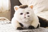 ふくまる=ドラマParavi『おじさまと猫』(2021年1月6日スタート) (C)「おじさまと猫」製作委員会