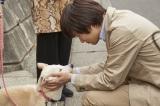 映画『さくら』メイキング写真(C)西加奈子/小学館 (C)2020「さくら」製作委員会