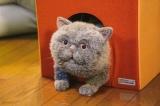 マリン(C)「おじさまと猫」製作委員会