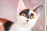 リツイートで簡単に参加できる「#BSキャッ東は多くの猫を救いたい」キャンペーンも実施(画像提供:公益社団法人アニマル・ドネーション)