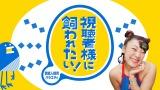 『視聴者様に飼われたい!』第3弾決定。ザ・マミィ初挑戦、エイトブリッジ再び (C)テレビ東京