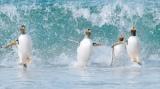 『驚き!海の生きもの超伝説 劇場版 ダーウィンが来た!』(6月11日公開)