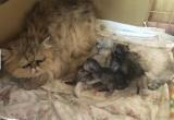 劣悪な環境の中で病気になりながら、出産を繰り返していた(写真:ねこけんブログより)