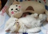 救われた子猫も、スヤスヤ!(写真:ねこけんブログより)
