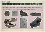 展示のみどころ『カセキポケモンによく似た、私たちの世界の化石標本』