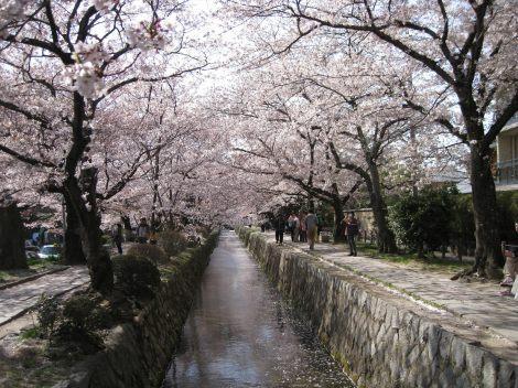 ショートフィルム『津波そして桜』=「Discover Beauty プログラム」