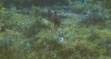 映画『ONODA(原題)』2021年秋、全国公開(C)bathysphere ‐ To Be Continued ‐ Ascent film ‐ Chipangu ‐ Frakas Productions ‐ Pandora Film Produktion ‐ Arte France Cinema