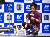 """愛犬の""""のすけ""""そっくりな人形に興奮するぺこぱ・松陰寺太勇 (C)ORICON NewS inc."""