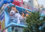 「#負けにゃいで」新宿の巨大3D三毛猫とZARDのスペシャルコラボ映像放映もスタート(9月28日まで)